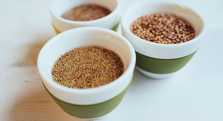 Essbare Sprossen - Gesund und Dekorativ   © mahl&zeit